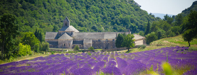 Lavender Field And Senanque Abbey